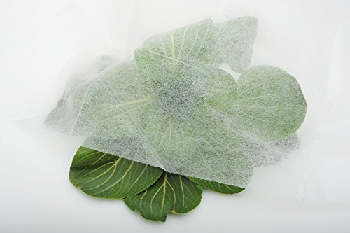 Agfabric-055-Oz-6x200Seed-Germination-Cover-Garden-Fabric-Row-Cover-Frost-Cloth-0-0