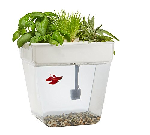 Back-to-the-Roots-Water-Garden-Fish-Tank-0-1
