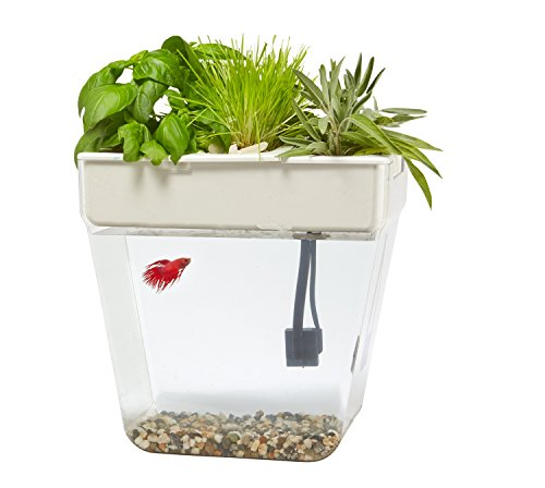 Back-to-the-Roots-Water-Garden-Fish-Tank-0