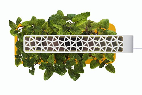 Click-Grow-Indoor-Smart-Herb-Garden-0-0