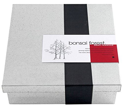 Dawn-Redwood-Forest-Bonsai-Box-0-0