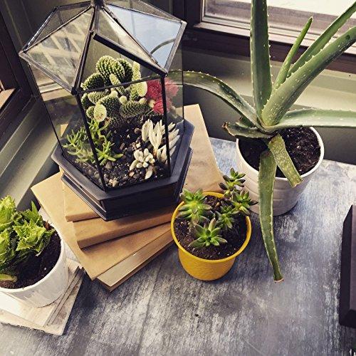 H-Potter-Six-Sided-Glass-Terrarium-Planter-0-0