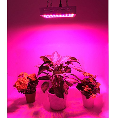 King-Plus-600w800w1000w-Double-Chips-Led-Grow-Light-Full-Specturm-for-Greenhouse-and-Indoor-Plant-Flowering-Growing-10w-Leds-0-1