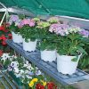 Shelf-Kit-for-Palram-Greenhouses-0-0