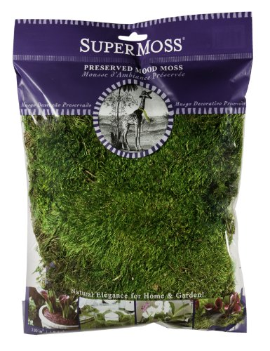 SuperMoss-Mood-Moss-Preserved-0