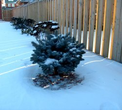 Winter-Shrub-Cover-0-1