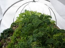 30FT-Long-Agfabric-Hoop-House-Kit-Mini-Greenhouse-Grow-Tunnel-09oz-Floating-Row-Cover-with-Tunnel-HoopsPlant-Cover-Frost-Blanket-for-Season-Extension-and-Seed-Germination-0-1