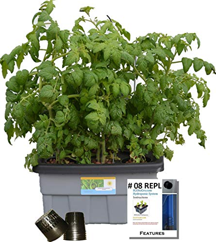 Basic-Hydroponic-DWC-Plant-Growing-kit-8-6-site-H2OtoGro-0