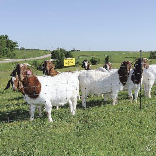 Premier-Enhanced-40-Electric-Sheep-Goat-Net-Fence-GreenBlack-9406EG-0
