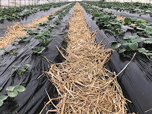 Agfabric-06mil-Landscape-Garden-Film-Embossed-Plastic-Mulch-Strawberry-Tomato-Potato-Weed-Barrier-Polyethylene-Sheeting-4x300ft-Black-0