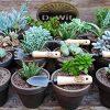 DeWit-Bonsai-Tool-Kit-in-Wooden-Box-0-0